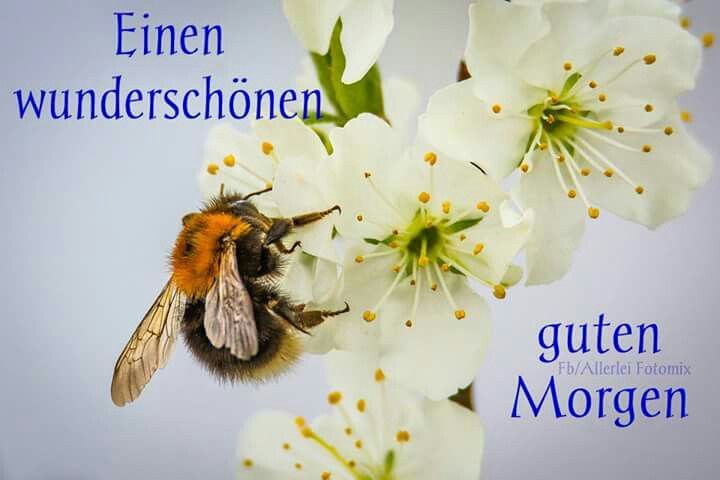Guten Morgen Bilder Download - Guten Morgen Bilder Download