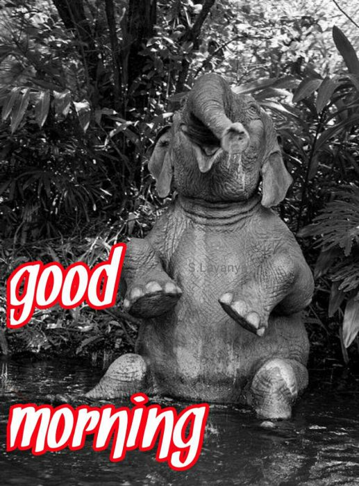 Animals Greeting Good good morning Images - Animals Greeting Good good morning Images