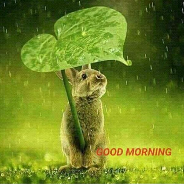 Animals Greeting Good morning greetings Images - Animals Greeting Good morning greetings Images