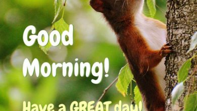 Animals Greeting Good morning with love Images 390x220 - Animals Greeting Good morning with love Images