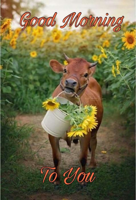 Animals Greeting Morning special Images - Animals Greeting Morning special Images