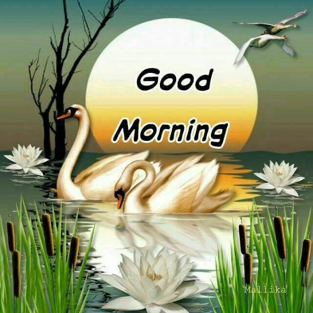 Birds good morning images Greetings Images - Birds good morning images Greetings Images