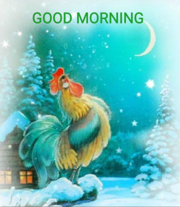 Birds great morning photo Greetings Images - Birds great morning photo Greetings Images