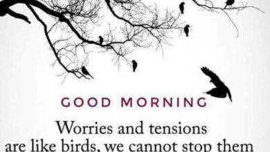 Birds great morning photos Greetings Images 390x220 - Birds great morning photos Greetings Images