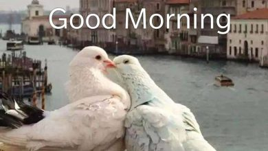 Birds morning greeting photo Greetings Images 390x220 - Birds morning greeting photo Greetings Images