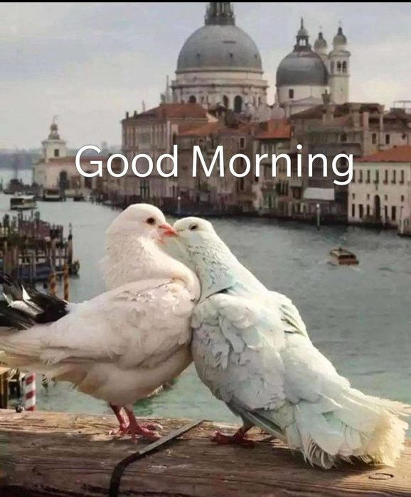 Birds morning greeting photo Greetings Images - Birds morning greeting photo Greetings Images