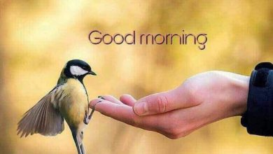Birds new good morning images Greetings Images 390x220 - Birds new good morning images Greetings Images
