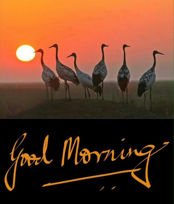 Birds photo Greetings Images - Birds photo Greetings Images