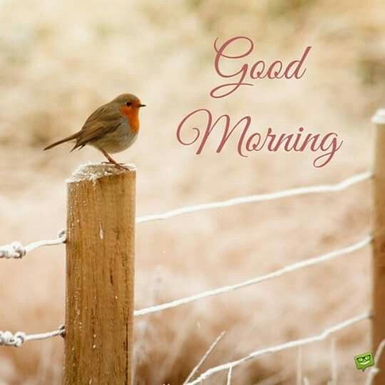 Birds sweet morning photos Greetings Images - Birds sweet morning photos Greetings Images