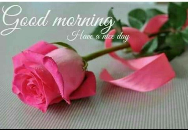 Flower great morning photo Greetings Images - Flower great morning photo Greetings Images