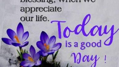 Flower morning wishes image Greetings Images 390x220 - Flower morning wishes image Greetings Images