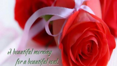 Flower sweet morning images Greetings Images 390x220 - Flower sweet morning images Greetings Images