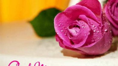 Flower sweet morning photo Greetings Images 390x220 - Flower sweet morning photo Greetings Images