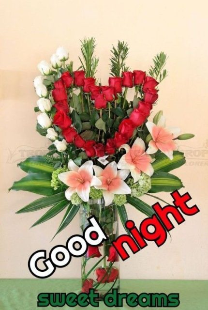 Good night sms messages image - Good night sms messages image
