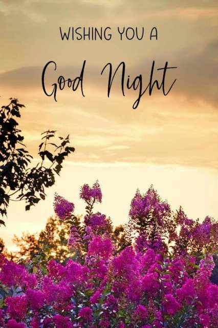 Good nite message image - Good nite message image