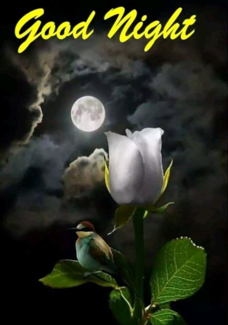 Good nite wish to someone special image - Good nite wish to someone special image