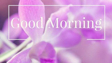 Rose new good morning images Greetings Images 390x220 - Rose new good morning images Greetings Images