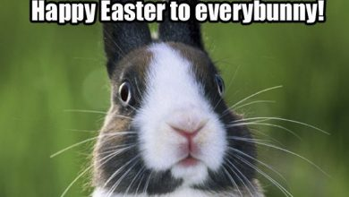 Happy Holidays Easter 390x220 - Happy Holidays Easter