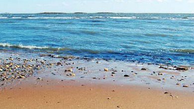 Beach Quotes image 390x220 - Seaside Quotes picture