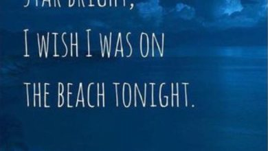 Inspirational Summer Camp Quotes image 390x220 - Inspirational Summer time Camp Quotes picture