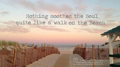 Quotes About Hot Summer Days image 390x220 - Quotes About Sizzling Summer time Days picture
